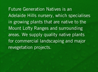 Future Generation Natives is an Adelaide Hills nursery, which specialisesin growing plants that are native to the Mount Lofty Ranges and surrounding areas. We supply quality native plants for commercial landscaping and major revegetation projects.